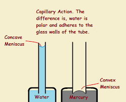 Capillary Action From The Forces Of Adhesion And Cohesion