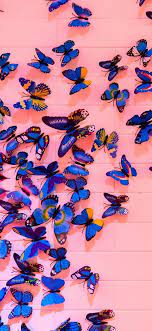 Butterfly iPhone Wallpapers on WallpaperDog