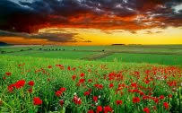 full hd nature wallpapers 1080p desktop in green landscape with flowers