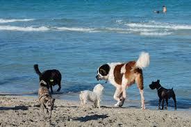 Σεμινάριο ''Διακοπές με τον Σκύλο μου'' και παιχνίδι στο ΕΚΕΣ Αλίμου...