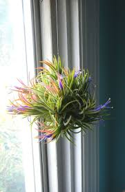 Best 70+Air Plants DIY Ideas And Inspiration For You