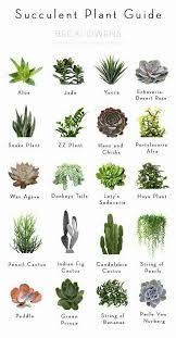 Succulent Size Chart Succulent Succulent Plant Guide Weddingideasindoor Plants