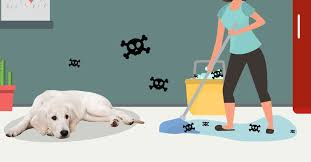 pet safe cleaners