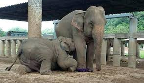 Baby Elephant Drawings N A Mother And Baby Elephant Mommy Drawings Is Having Mom Milk From