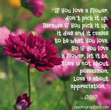 Love Flower Quotes Adorable If You Love A Flower Don't Pick It Up Because If You Pick It Up It