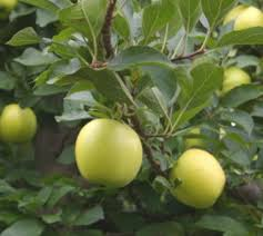 Best 25 Tree Pruning Ideas On Pinterest  Pruning Fruit Trees How Often Should I Water My Fruit Trees