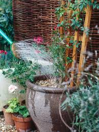 Nasturtiums And Cedar Wall  Climbing Flowers Plants And GardensWall Climbing Plants In Pots