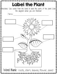 Plant Labeling Worksheet - Freebie Teach your students about the ...