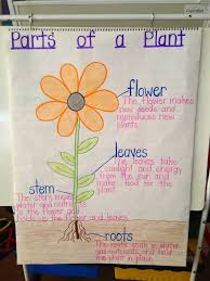 This Is An Another Anchor Chart About Parts Of A Plant It
