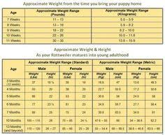 Rottweiler Size And Weight Chart Puppy Weight Calculator Online Charts Collection