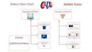 Kidney Flow Chart By Kittykatt 101 On Prezi