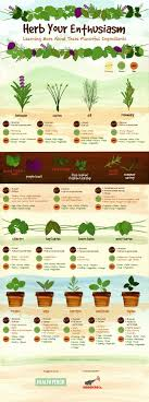Small Picture 25 best Culinary herb ideas on Pinterest Herb 13x19 poster