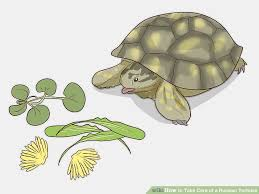 How To Take Care Of A Russian Tortoise 10 Steps With Pictures