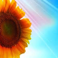 夏よ来いポスト 夏の花と言えばひまわりひまわりを見ると夏が来たー