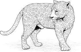 Jaguar Coloring Pages To Print Gallery Coloring Pages For Kids