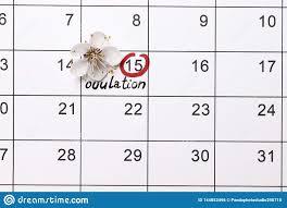 Entourer La Planification De Date Du Calendrier De Grossesse