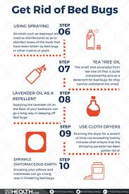 23 best Bed bugs control images on Pinterest   Bed bug control ...