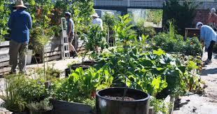 community gardening. Interesting Gardening The Community Gardening Movement To Community Gardening D