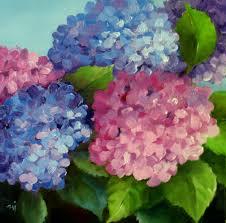 garden hydrangeas sold
