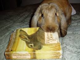 Image result for bunny reading a book