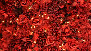 3d rose live wallpaper download