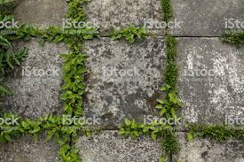 Grass background tile Family Pavement Tiles And Green Grass Background Royaltyfree Stock Photo Istock Pavement Tiles And Green Grass Background Stock Photo More