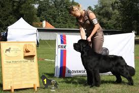 boatswain dog. ch cz, jch sk, hr boatswain´s diamond ain´t no saint boatswain dog