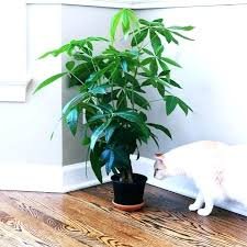 indoor plants for cats indoor plants for cats bringing nature indoors house plants that are safe