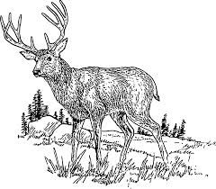 Deer Coloring Pages Tags Coloring Book