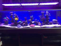 led aquarium light orphek
