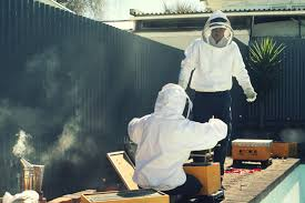 The Perfect Manuka Honey For You Ezie Bee