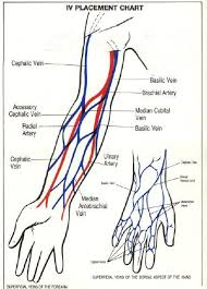 Iv Placement Chart Blood Vessels Of The Arm And Hand Iv
