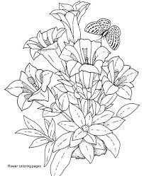 Hawaiian Flower Coloring Page Fresh Floral Coloring Pages Flowers