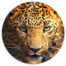 leopard face close up animal disc metal artwork 11  on leopard metal wall art with leopard face close up animal disc metal artwork contemporary