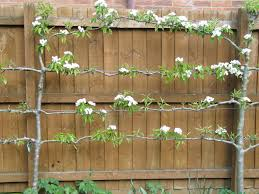 Designer Trees For Small Gardens Download Trees For Small Gardens Solidaria Garden