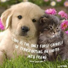 Quotes About Pets And Friendship Adorable Gallery Dog And Cat Friendship Quotes Best Romantic Quotes