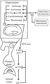 Ijms Special Issue Role Of The Hypothalamo Pituitary Adrenal