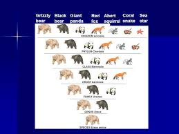 Bear Classification Chart Classification Ppt Video Online Download