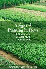planting in rows for your vegetable garden
