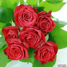 أجمل الزهور images?q=tbn:ANd9GcR