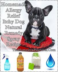 Homemade Allergy Relief Itchy Dog Natural Remedy Spray Homesteading ...