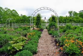 my large flower cutting garden which measures 150 feet by 90 feet is growing more and more lush each year i wanted the plants to be mixed