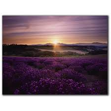 graham brown home lavender sunset canvas print find your local store stocking wall art on graham and brown wall art ireland with graham brown lavender sunset canvas print wall art topline ie