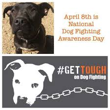 best pets abuse dog race fight bait hunt mills breed images on   is national dog fighting awareness day