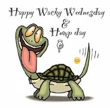 Funny Hump Day Quotes Impressive Happy Wacky Wednesday Hump Day Funny Laughing Tortoise Picture