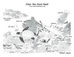 Coral Reef Template Printable Beautiful Aquarium Background Coloring