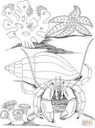 Crab Printables Crab Coloring Page Hermit