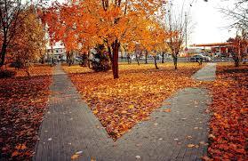 16 ciekawostek o jesieni dla dzieci - Fajne Podróże