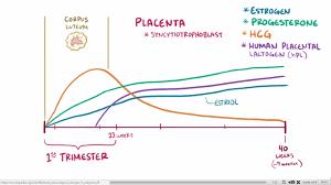 Estradiol Levels During Pregnancy Chart 62 Extraordinary Pregnancy Hormones Graph