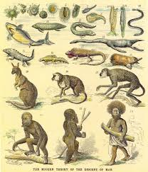 Chart Of Human Evaluation Deus Former Mate Human Being Trend Human Evolution